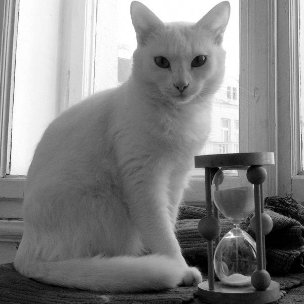 Hourglass 22